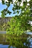 Gröna trädbraches som reflekterar i vatten Arkivfoto