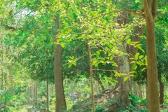 Gröna trädskogar i Thailand royaltyfria foton