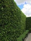 Gröna trädväggar med blå himmel Arkivfoto