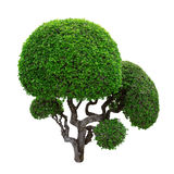 gröna trees arkivfoton