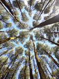 gröna trees Royaltyfri Bild