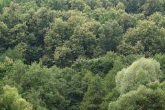 gröna trees Arkivfoto