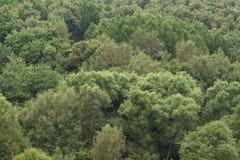 gröna trees Royaltyfria Bilder