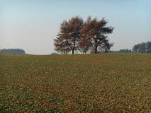 gröna trees för fält Royaltyfri Foto