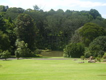 gröna trees för gräs Royaltyfri Fotografi