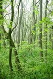 gröna trees för skog arkivbilder