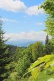 gröna trees Maxima för högt berg på horisonten Vår i Carpathian ukraine Arkivfoton