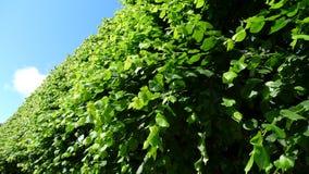 Gröna trees med den blåa skyen Royaltyfria Foton