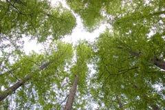 gröna trees uppåt royaltyfria bilder