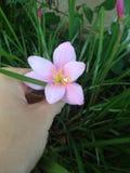 Gröna trevliga blommor Fotografering för Bildbyråer