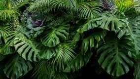 Gröna tropiska sidor av Monstera, ormbunke, och gömma i handflatan ormbunksblad raien royaltyfria foton