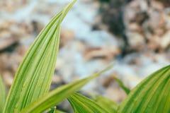 Gröna tropiska sidor med vatten tappar på bergliten vikbakgrund Arkivfoton