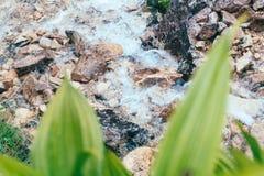 Gröna tropiska sidor med vatten tappar på bergliten vikbakgrund Royaltyfria Bilder