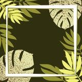 Gröna tropiska sidor på den mörka bakgrunden Royaltyfria Foton