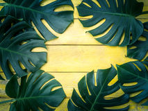 Gröna tropiska sidor på gul wood bakgrund Arkivbilder