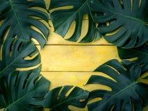 Gröna tropiska sidor på gul wood bakgrund Royaltyfri Fotografi