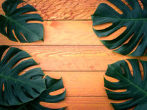Gröna tropiska sidor på orange wood bakgrund Arkivbild