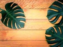 Gröna tropiska sidor på orange wood bakgrund Arkivfoto