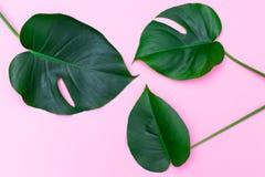Gröna tropiska sidor på rosa bakgrund Lekmanna- lägenhet Royaltyfria Foton