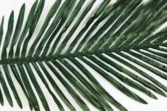 Gröna tropiska sidor som isoleras på vit bakgrund, närbild, till arkivbilder