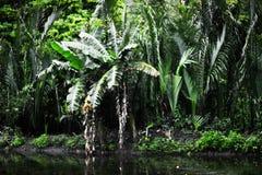 Gröna tropiska växter Fotografering för Bildbyråer