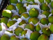 Gröna turkiska fikonträd Arkivfoto