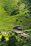 Gröna uppehällegräsmarktak som täckas med vegetation, flyg- sikt, lägenheter royaltyfri foto
