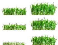 gröna växande isolerade faser för olikt gräs Arkivfoto