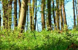 Gröna växande små träd och buskenärbild royaltyfri foto