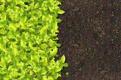 gröna växande växter Royaltyfri Bild