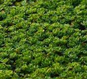 Gröna växter överst av ett fotografi för dammvattenmateriel Royaltyfri Bild