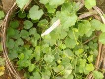 gröna växter arkivbild