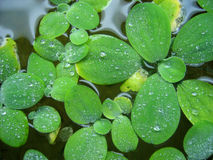 gröna växter Arkivfoton