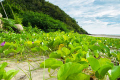 gröna växter arkivbilder