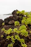 gröna växter Royaltyfri Fotografi