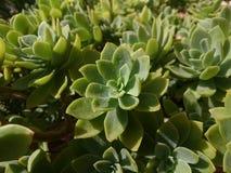 gröna växter Royaltyfri Bild