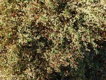 gröna växter för bakgrund Royaltyfria Foton