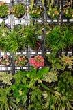 gröna växter för blommor Arkivfoton