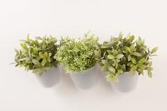 gröna växter för bot Royaltyfri Foto
