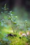 Gröna växter för din design Arkivfoto