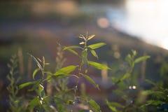 Gröna växter för din design Arkivbild