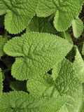 gröna växter för lövverk Arkivfoto