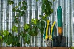 Gröna växter i ett växthus royaltyfria foton
