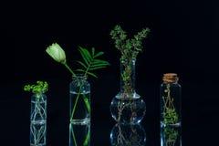 Gröna växter i glasflaskor royaltyfri bild