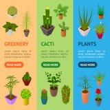 Gröna växter i krukabanret Vecrtical ställde in den isometriska sikten 3d vektor Royaltyfri Bild