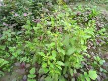 Gröna växter i trädgården arkivbild