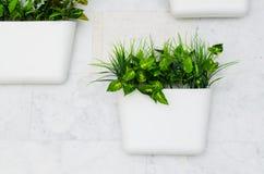Gröna växter i vita krukor på väggen, lodlinje som arbeta i trädgården i inre fotografering för bildbyråer