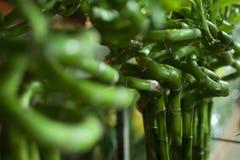 Gröna växter lite fotografering för bildbyråer