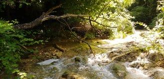 Gröna växter och små vattenfall royaltyfri bild