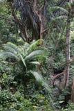 Gröna växter och träd i den Bali djungeln Indonesien Arkivbilder